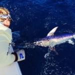 2:8:15 broadbill swordfish