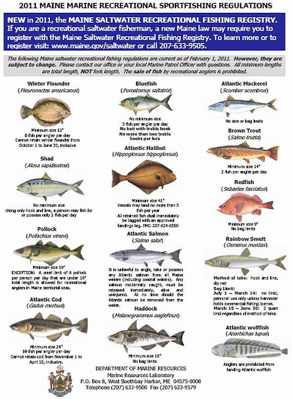 saltwater fish limits saltwater fish bag size limits ForNc Fishing Laws