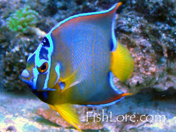 ichiba is a gallon saltwater reef tanks unparalleled in free