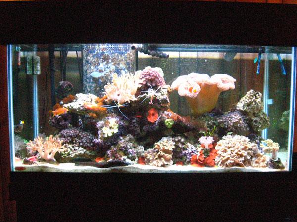 Saltwater fish tank 10 gallon 10g reef saltwater for Cheap 10 gallon fish tank