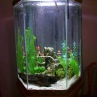 30 gallon fish tank hexagon - 30 Gallon Hexagon Fish Tank Aquarium