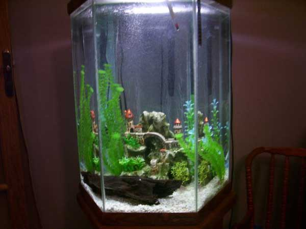 30 gallon hexagon fish tank 30 gallon hex tank 2017 for 20 gallon hexagon fish tank