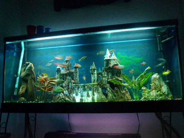 55 gallon fish tank ideas member spotlight butterfly for How many gallons in a fish tank calculator