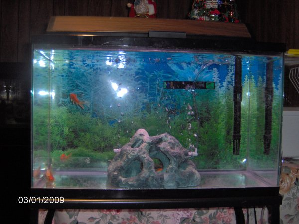 30 gallon fish tank how many goldfish 2017 fish tank for 10 gallon fish tanks