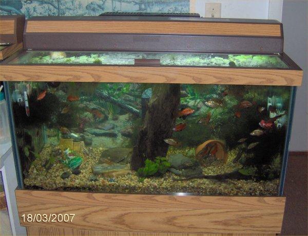 Fish tank maintenance 50 gallon top fin 50 gallon hooded for 10 gallon fish tank petsmart