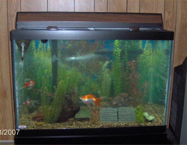 Fish tank 40 gallon gallon aquarium and stand 60 gallon for Distilled water for fish tank