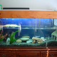 turtle tank setup - Large Turtle Tanks for Sale