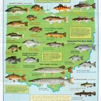 freshwater fish ohio - Fishing Tips & Fish Ohio Program | Friends of Punderson