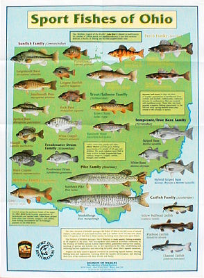 ohio fish identification chart Success