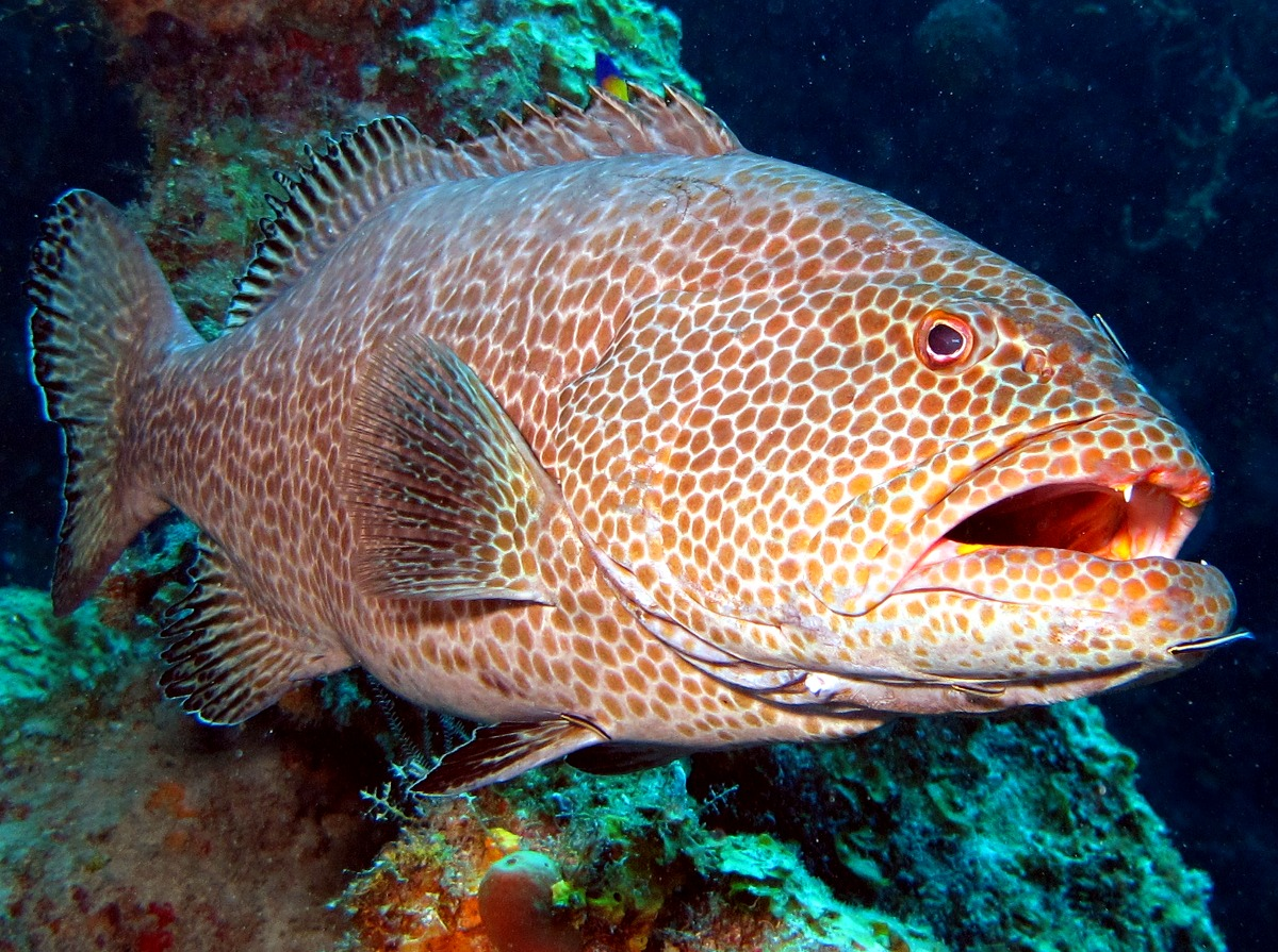 Cute Wallpapers Drawing Yellowfin Grouper Face Photo And Wallpaper Cute Yellowfin