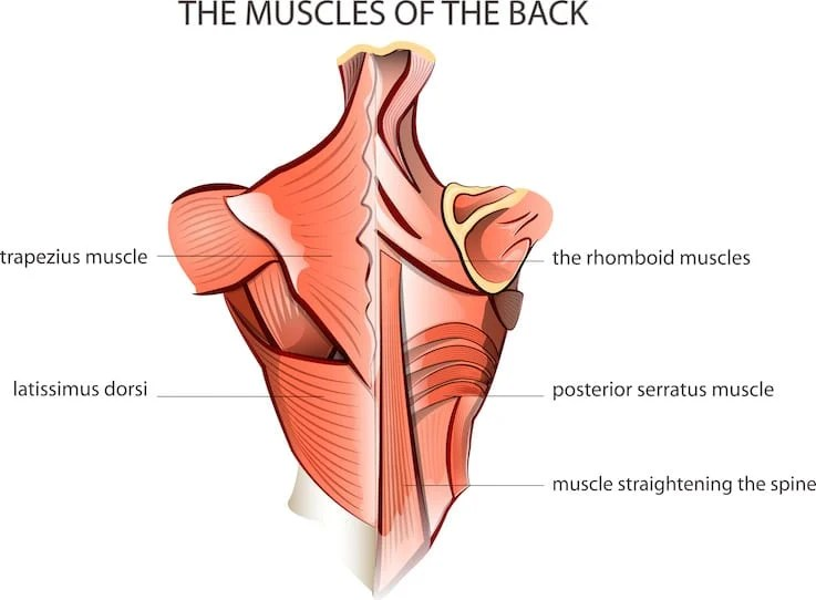 13 Best Back Exercises for Women for a Strong and Sexy Back