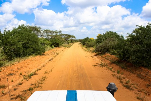 On the road in Tsavo National Park, Kenya.