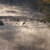Heron - F. Gross