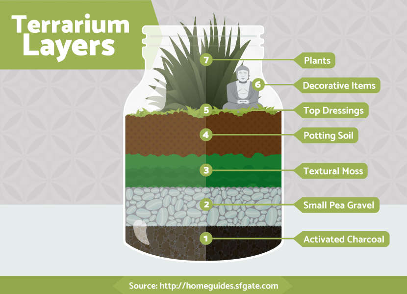Terrariums: The Different Layers
