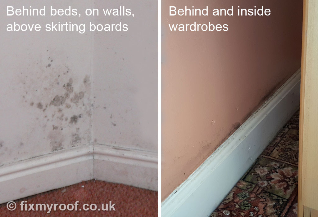 Black Mold Under Wallpaper How To Cure Condensation Free Top 10 Tips To A