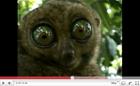 Tarsier Eyes (*3,550,999)