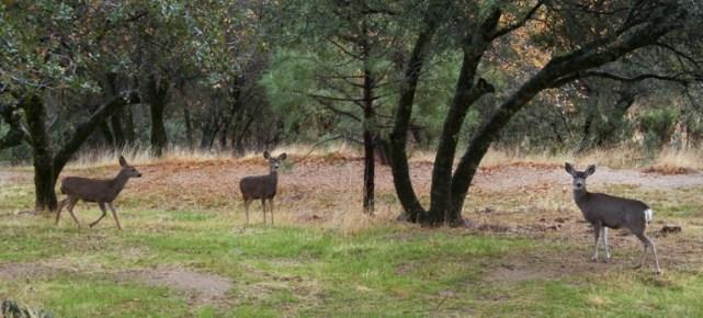 December deer