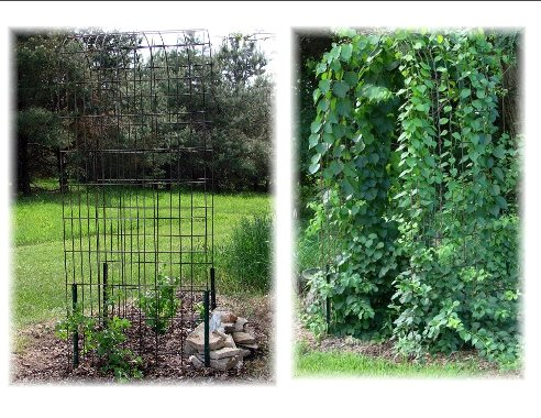 Jeanne wire arbor, before and after