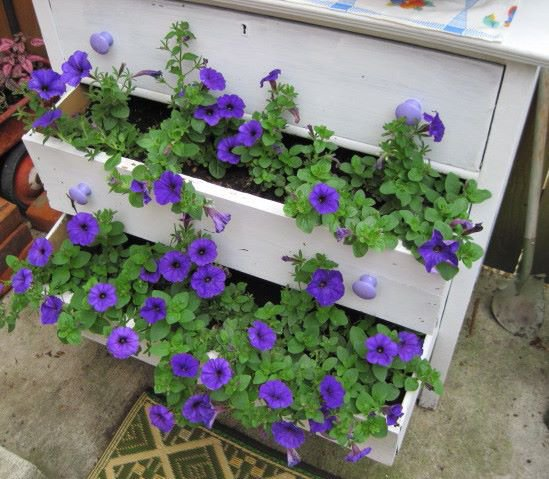 """Purple wave petunias filling out my ""drawers"" nicely...,"", Jeanie says."