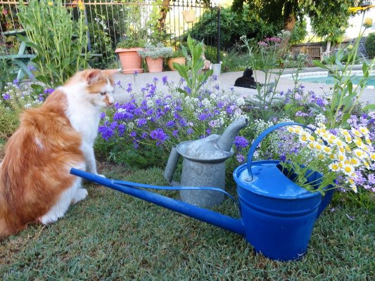Squirrely, come help with the watering...