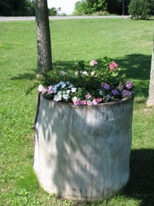 A wooden stump holds geraniums and impatiens