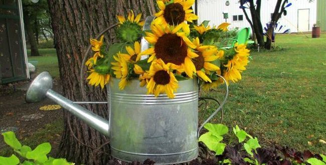Sue's Sunflowers -featured
