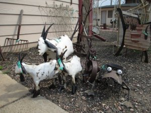 People search far and wide for these goats made from old cars