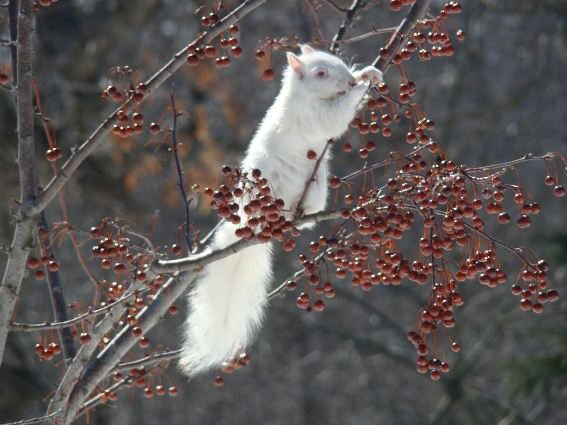 In honor of these pesky squirrels, here is a beauty. This was taken from my kitchen window.