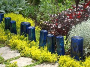 My 'blue bottle path' in Spring