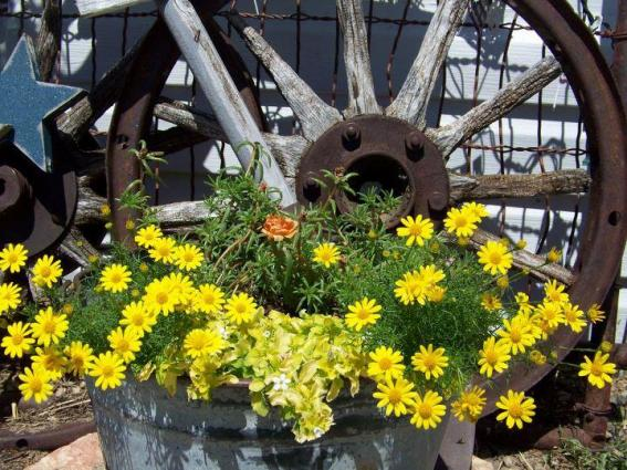 Denise Hallwachs' rustic and rusty wheel paired with sunny yellow daisies.