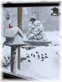 12 Ideas for your Winter windows | Flea Market Gardening