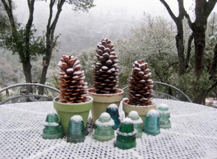 Pine cone pots in winter
