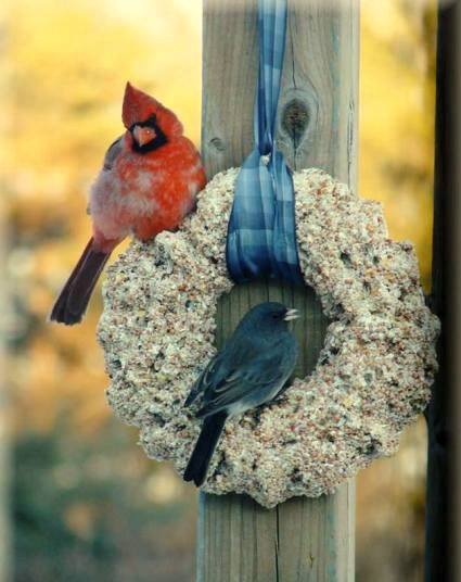 Jeanne 'captures' a Cardinal and a Junco.