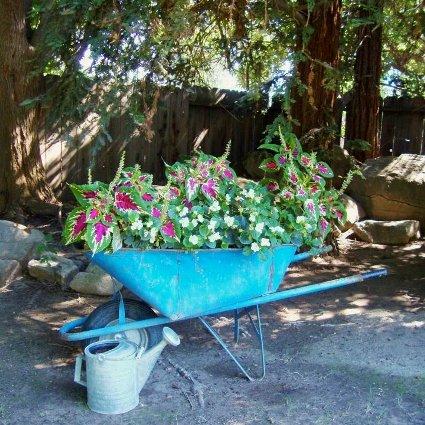 Jane Krauter's wheelbarrow
