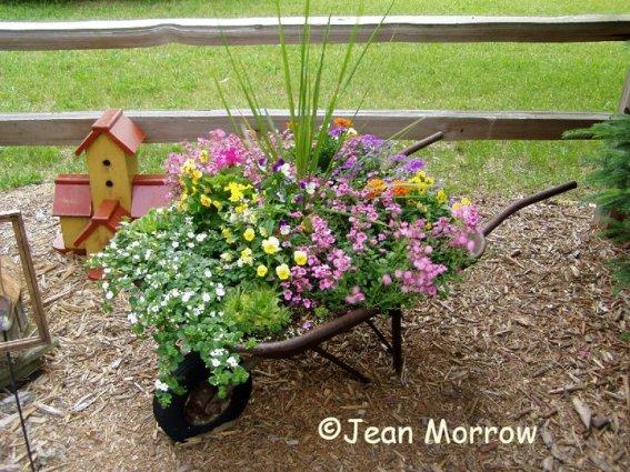 Jean Morrow's wheelbarrow