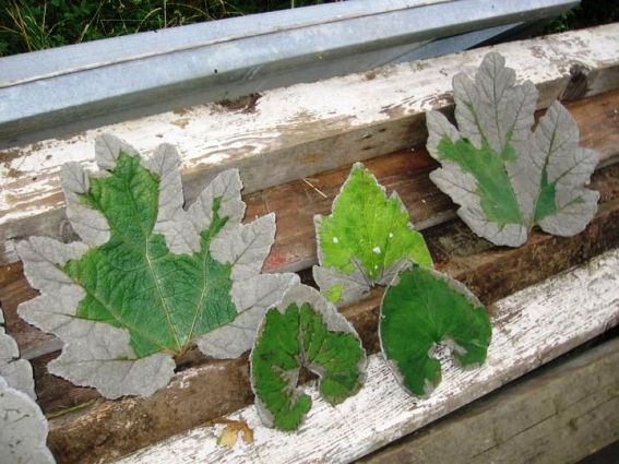 Jill  Waltenspiel's hypertufa leafcastings