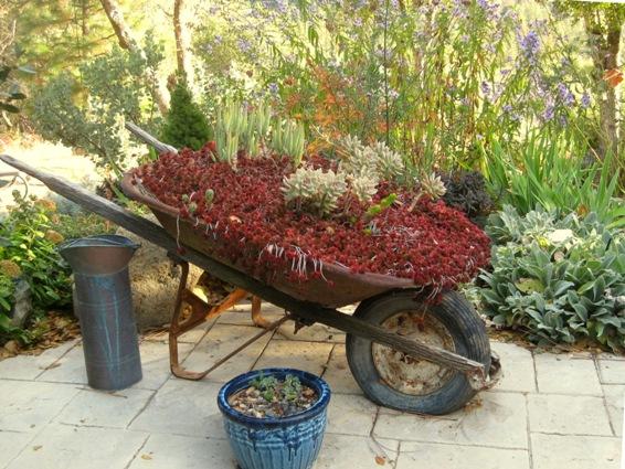 In Fall, my sedum wheelbarrow turns 'blood' red