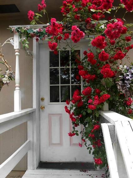 Olivia Parazine's rosy entrance