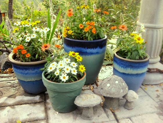 Zinnias are easy for containers, and can be grown easily from seed!
