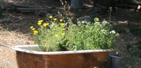 tub planter