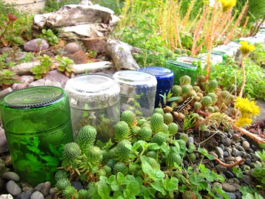 Tiny plants grow as the bottles age