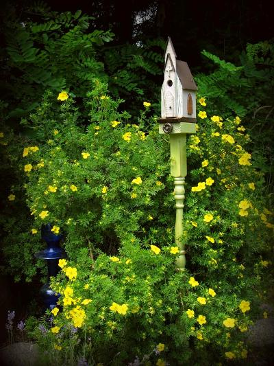 A rose climbs the porch post Kirk Willis used to raise his bird house