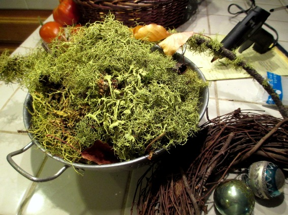 Collect fallen lichen