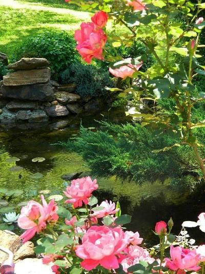 Dandi's painterly pond