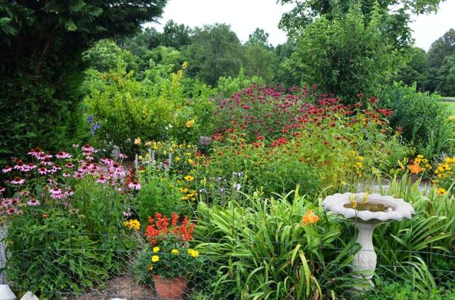 Pink Coneflowers, Rudbeckia and two colors of Bee Balm, pink and red.