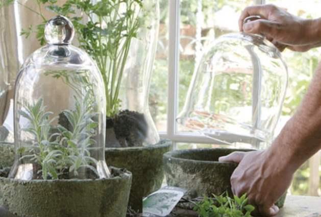 Hypertufa moss garden and cloche cover