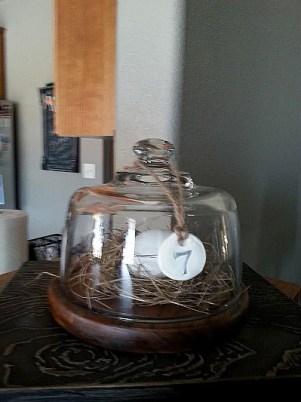 Sue Gerdes's cunning bird nest under glass