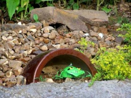 That green frog isn't nearly as fun as the one that really hops
