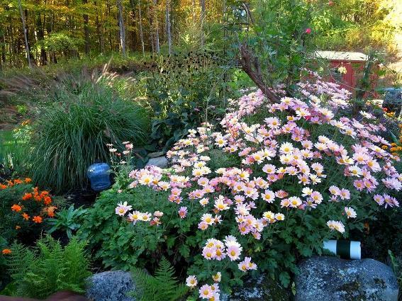 Lori Conley's cascade of pink mums