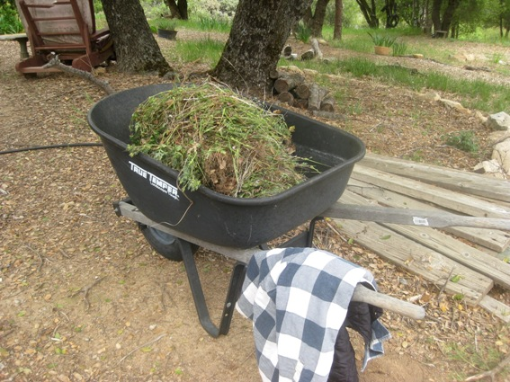 A wheelbarrow is handy fr collecting weeds and acts as a hanger for my flannel shirt
